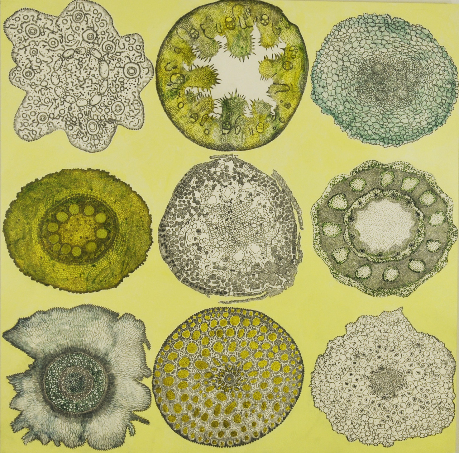Plant Cell Patterns #1, acrylic and graphite on panel, 30x30