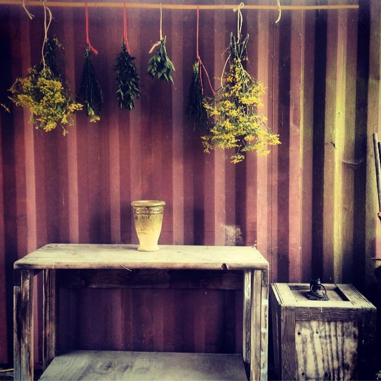 drying herbsjpg.jpg
