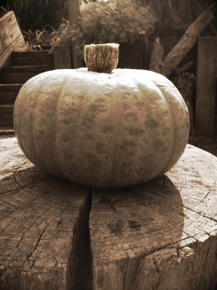 a pumpkin recipe