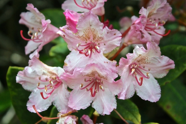 Rhodie Gathering