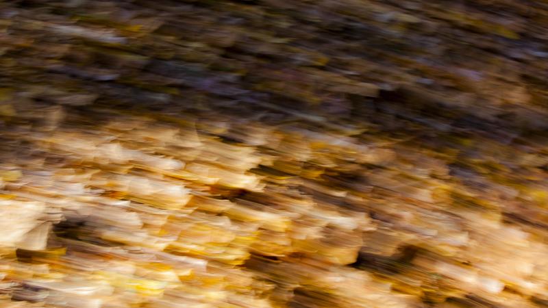 Autumnal Descent