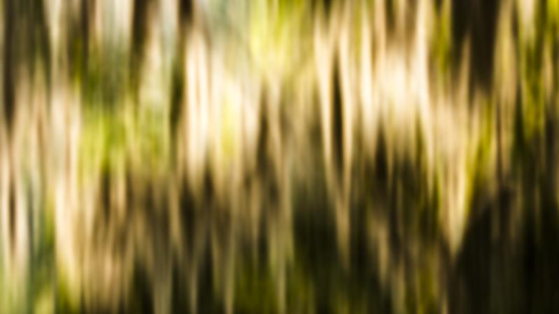 Spanish Moss and Light