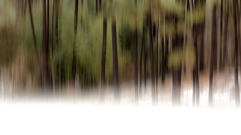 The Hush of Whispering Pines