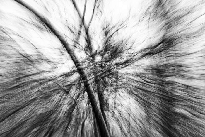 Falling Trees Monochrome