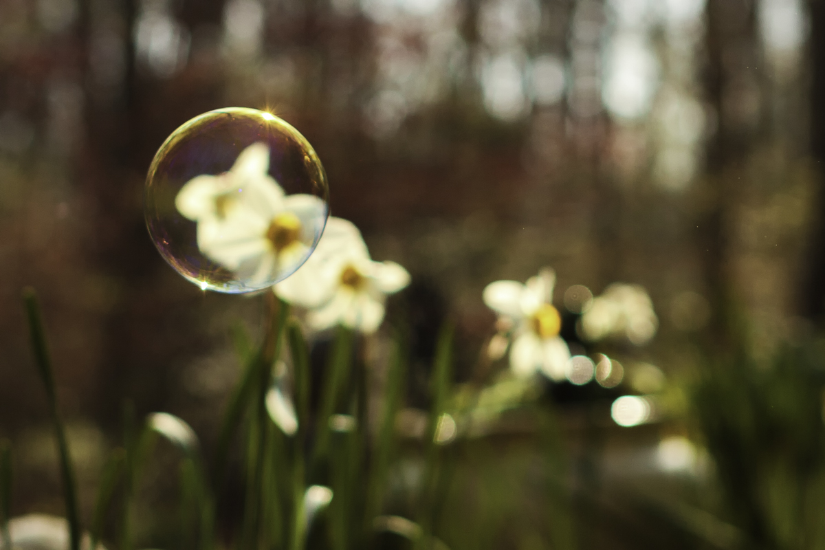 Daffodil and Bubble