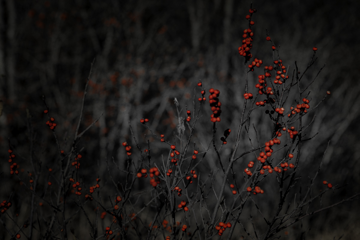 Moomaw Berries