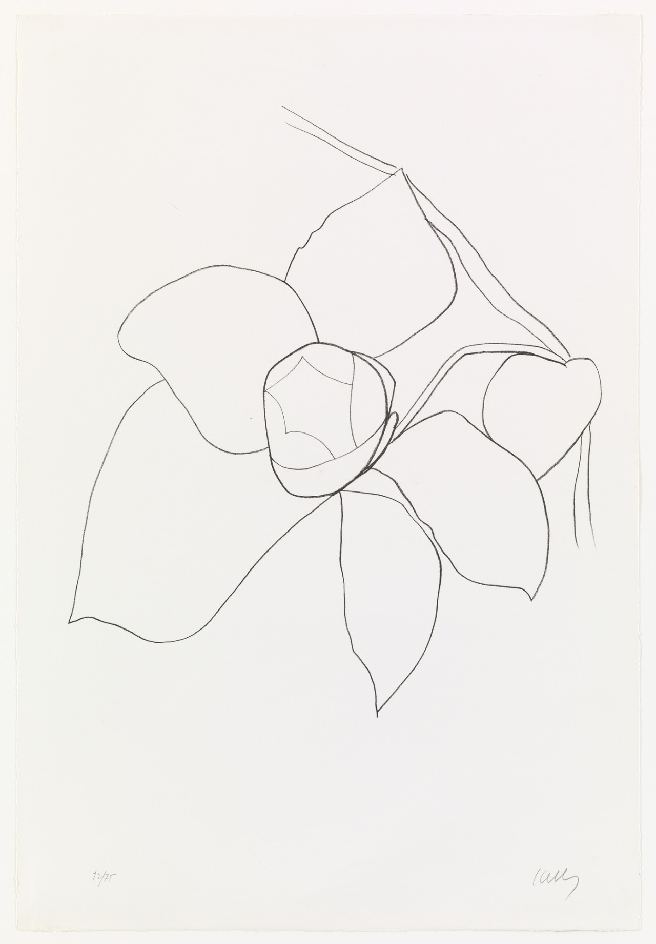 Ellsworth Kelly. Camellia II from Suite of Plant Lithographs. 1964–65, published 1966 Ellsworth Kelly Camellia II from Suite of Plant Lithographs 1964–65.jpg