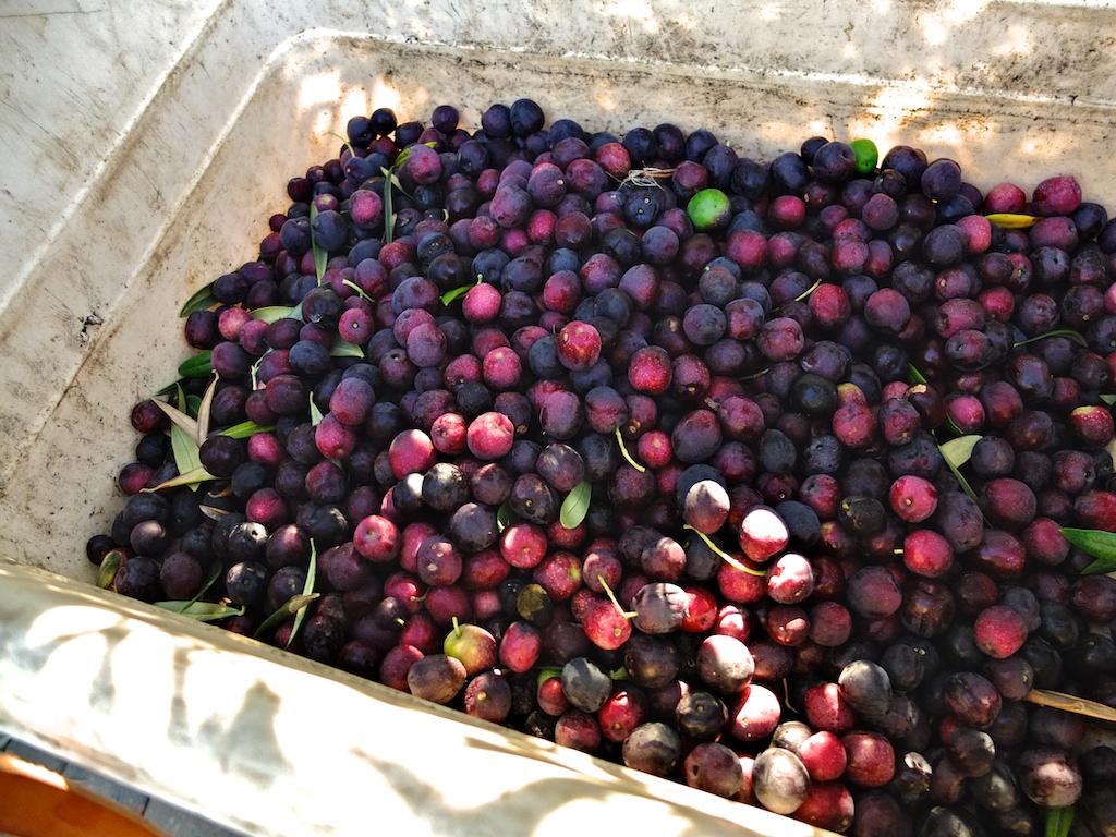 harvest2012 1.jpg