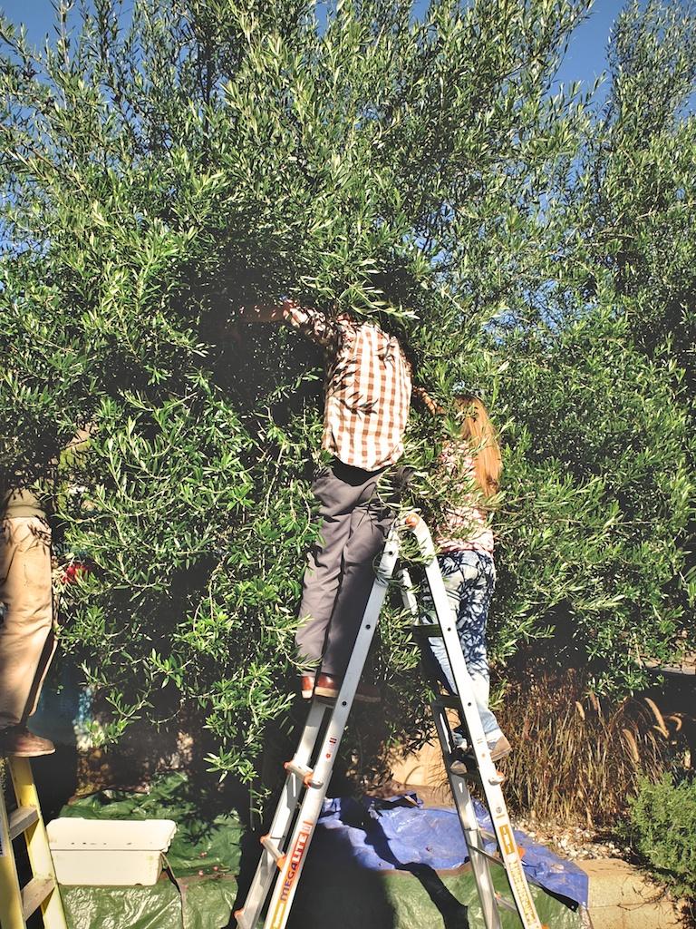 harvest2012 5.jpg