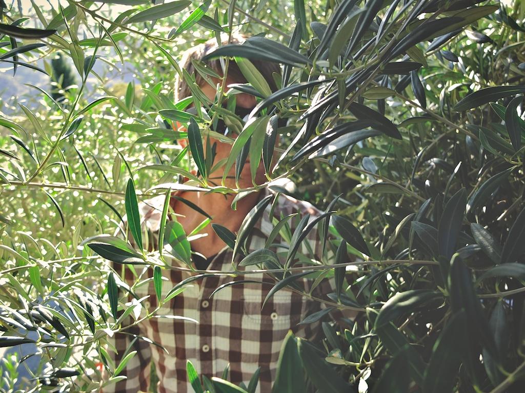 harvest2012 6.jpg