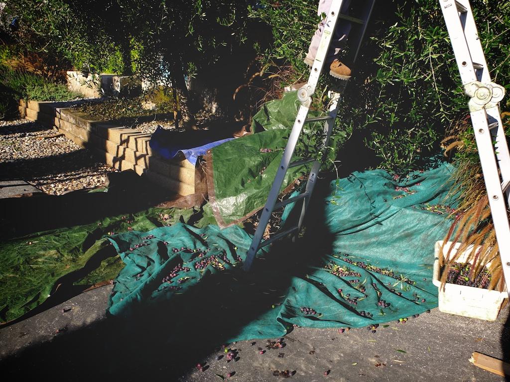 harvest2012 7.jpg