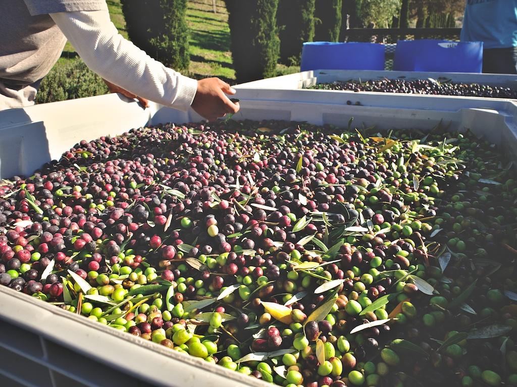 harvest2012 8.jpg