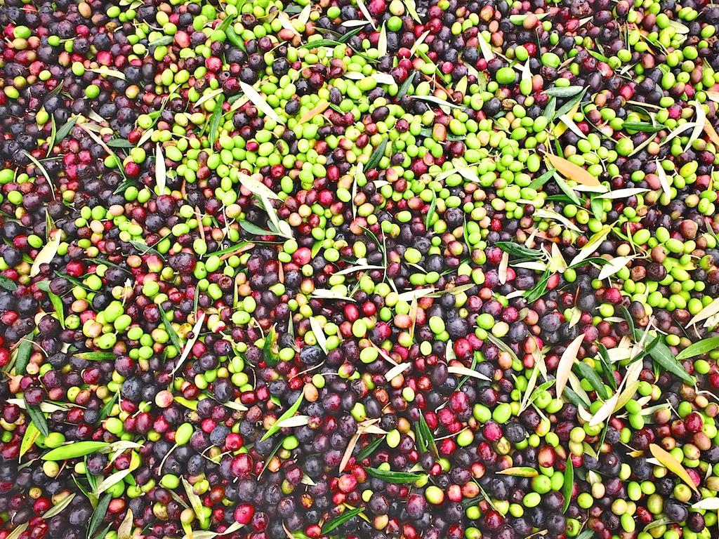 harvest2012 11.jpg
