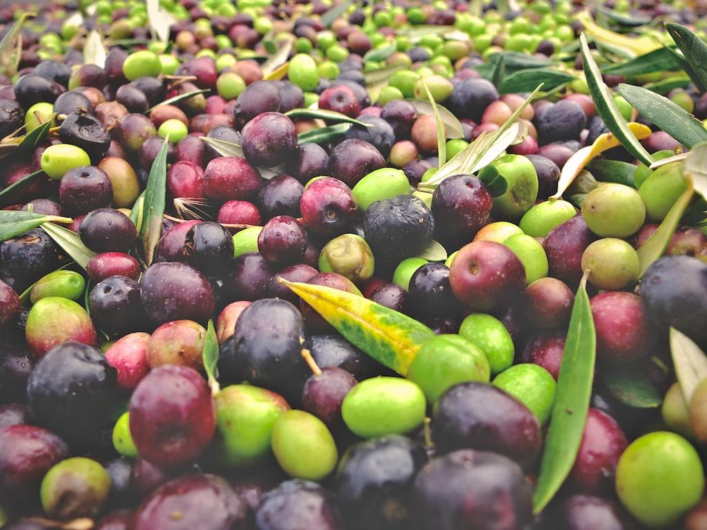 harvest2012 13.jpg
