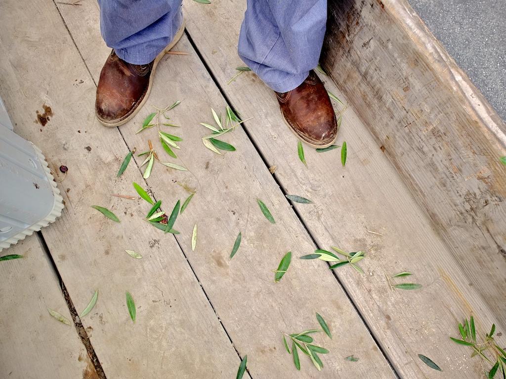 harvest2012 14.jpg