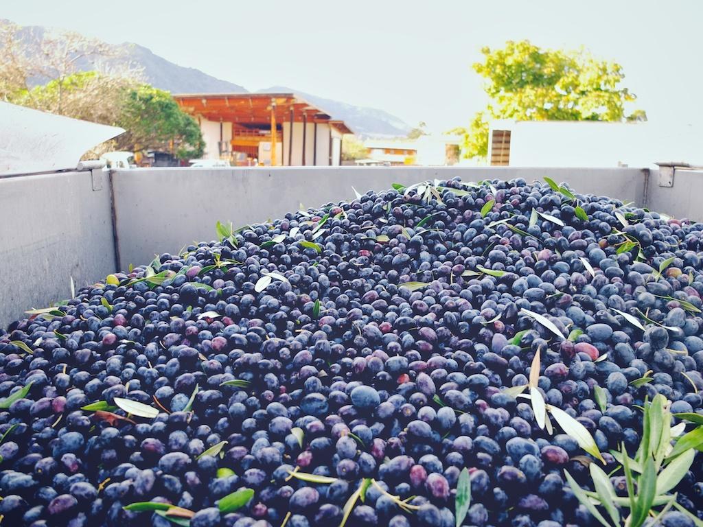 harvest2012 19.jpg