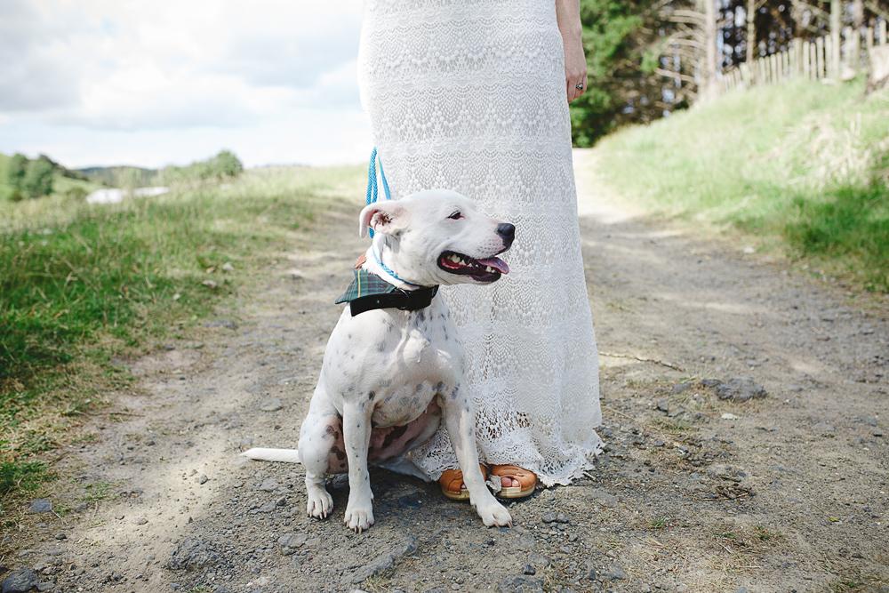 093-waimauku-wedding-photographer--woodland-wedding--farm-wedding.jpg