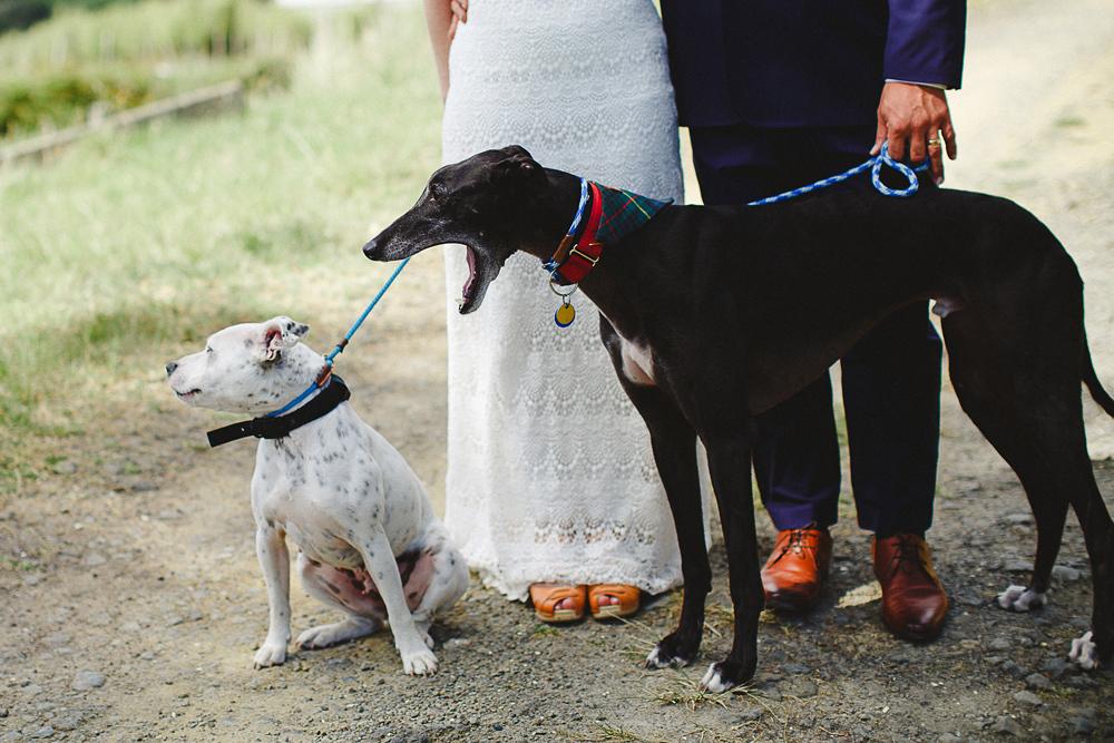 097-waimauku-wedding-photographer--woodland-wedding--farm-wedding.jpg