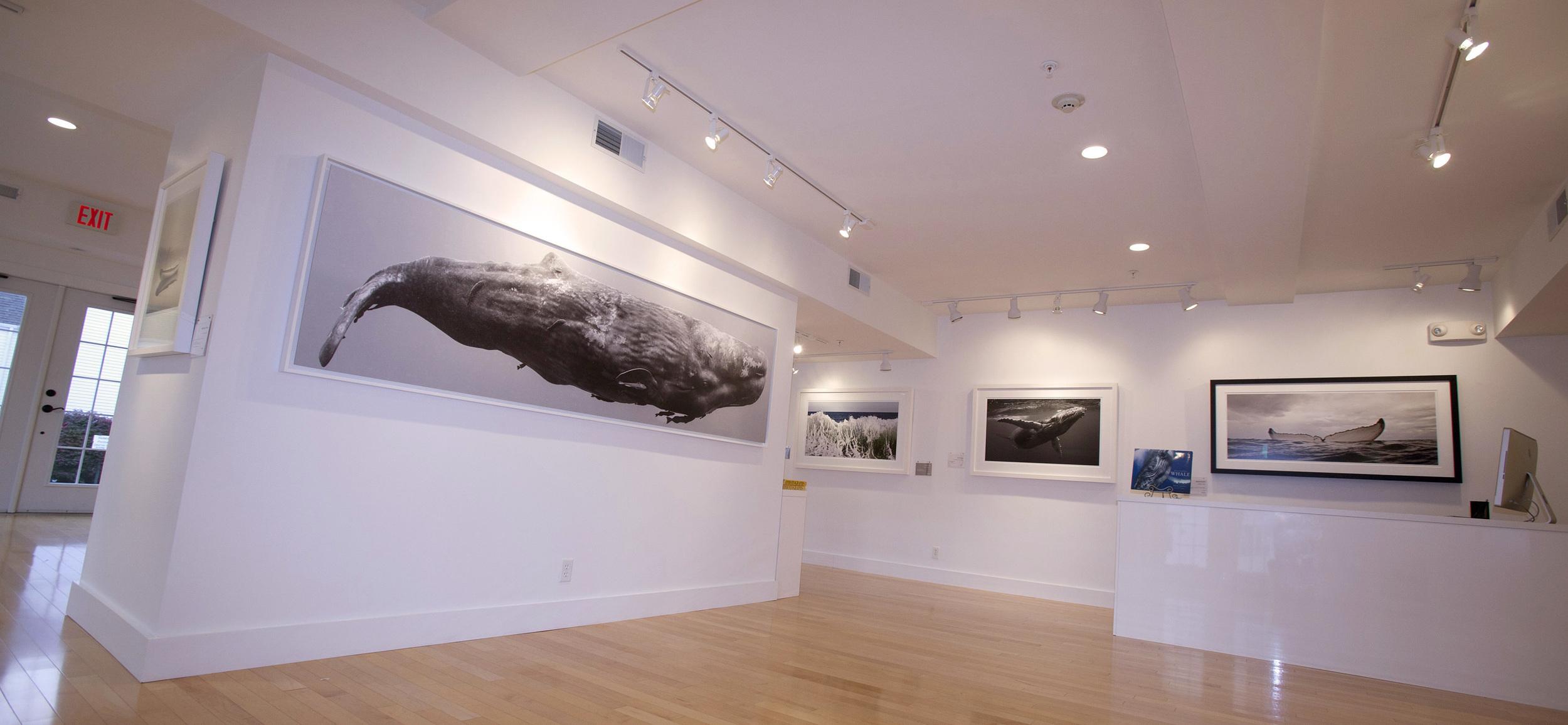Whales 3.jpg