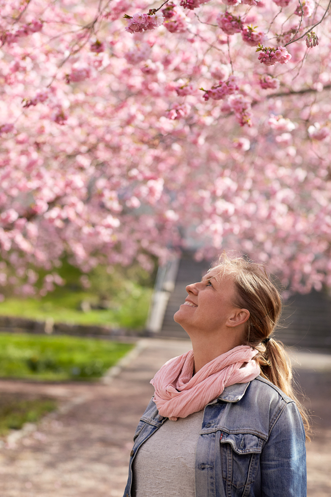 2014.04 - 15. körsbärsträd.jpg