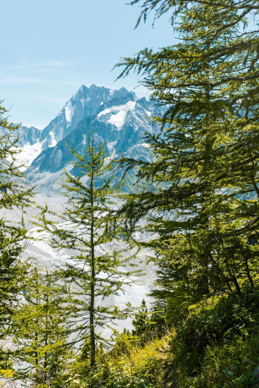 vegafoto-alsace-chamonix-zermatt-sommaren2019-17.jpg
