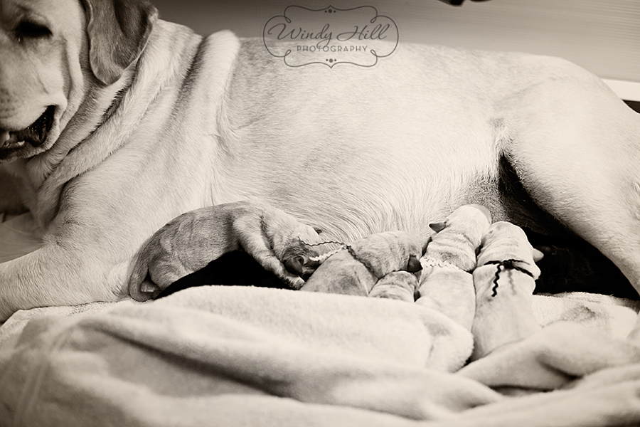 Poppy Puppies3.jpg