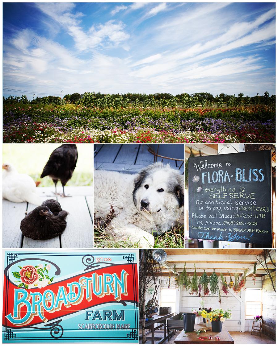 Maine Wedding Photography Broadturn Farm details around the farm Flora Bliss.jpg