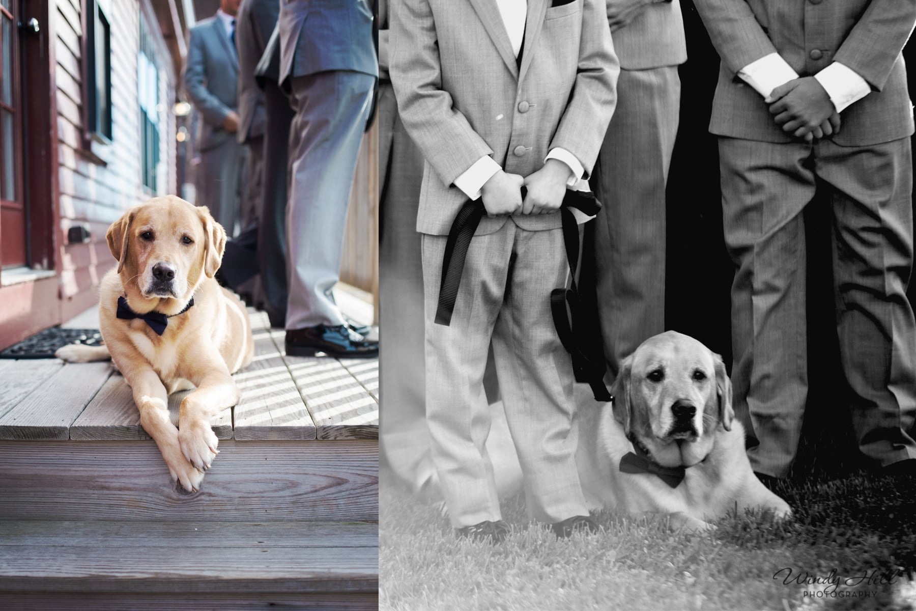 This is Ben, he is a very dapper boy! Just look at that bow tie. :) He was absolutely adorable during the ceremony, he belly crawled from his place at the end of the groomsmen over to his Dad(the groom) and lay their during the rest of the ceremony. So CUTE!