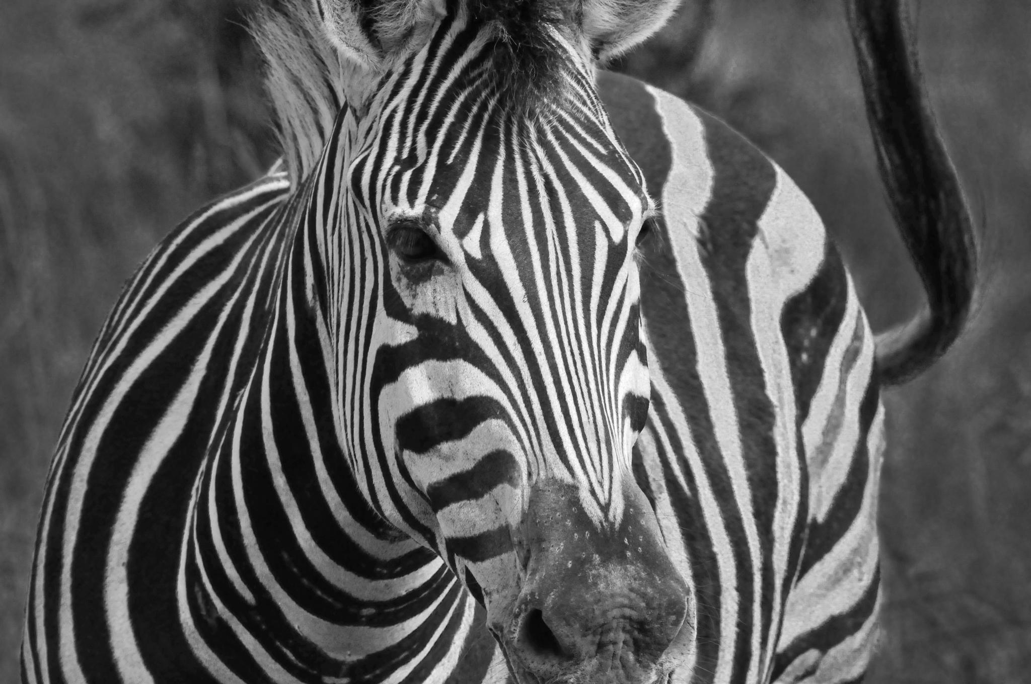 Africa2 489-edit.jpg