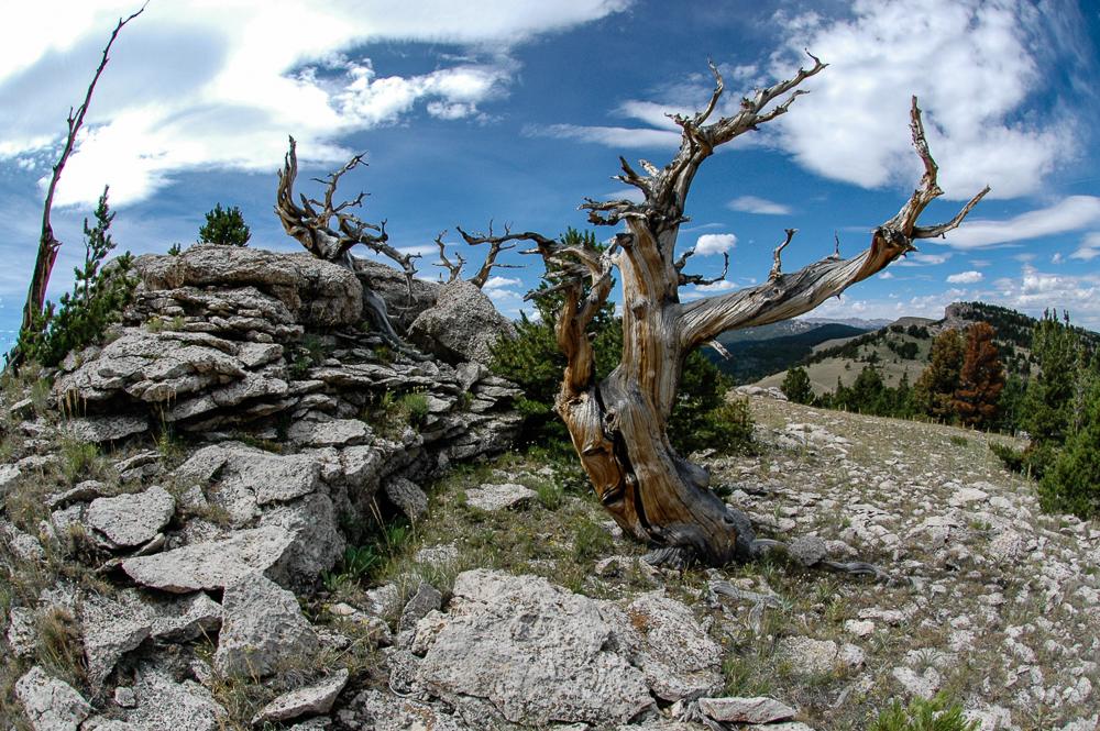 Wyoming 2008-Wind River Mountains.jpg