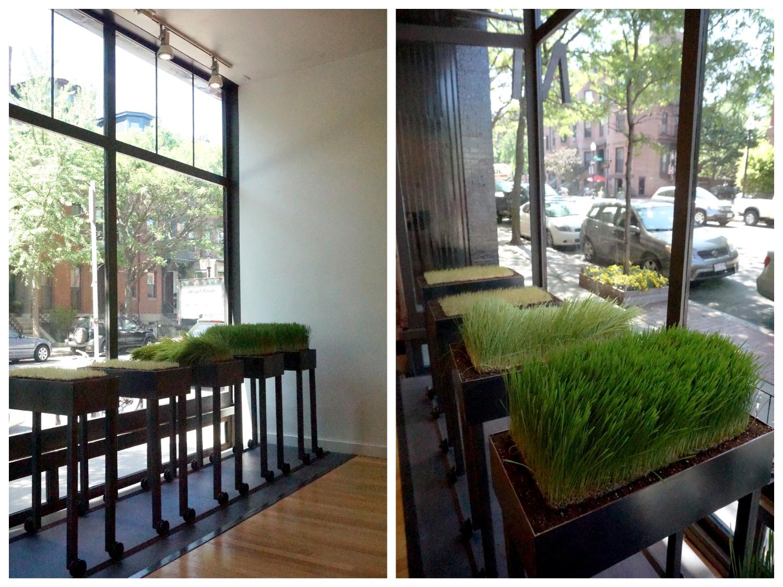 michelemercaldo_windowgrass
