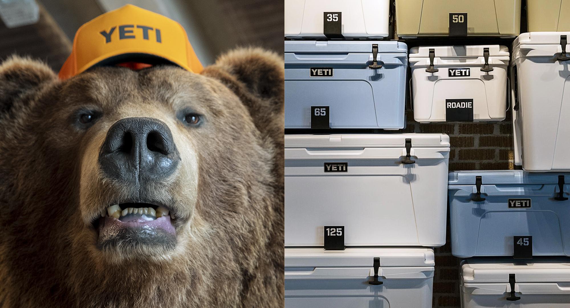 bear-tundra