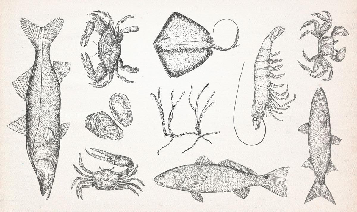 aquaticLifeScans.jpg