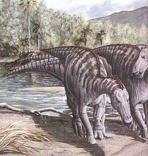 dinosaurtailfound02.jpg