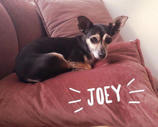Joey is seriouslyyyy  THE SWEETEST❣️ #permapuppydogeyes