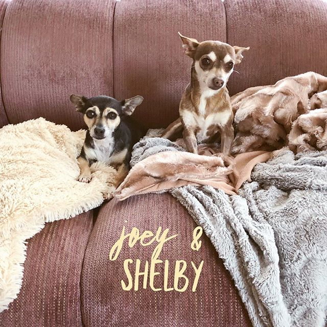 Just your daily dose of Joey & Shelby cuteness!  #BFFs #ReadyPetSet #AdoptJoey #AdoptShelby