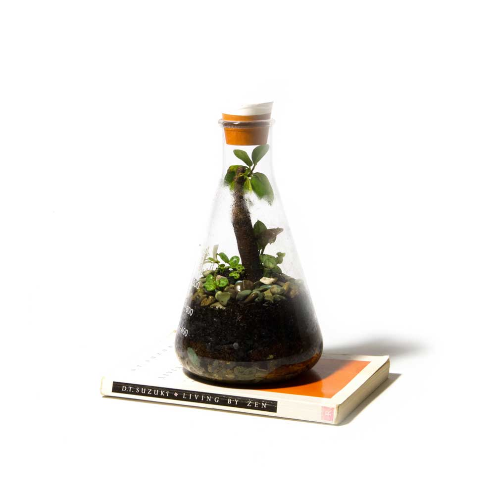 Terrarium-Low-Res-1.jpg