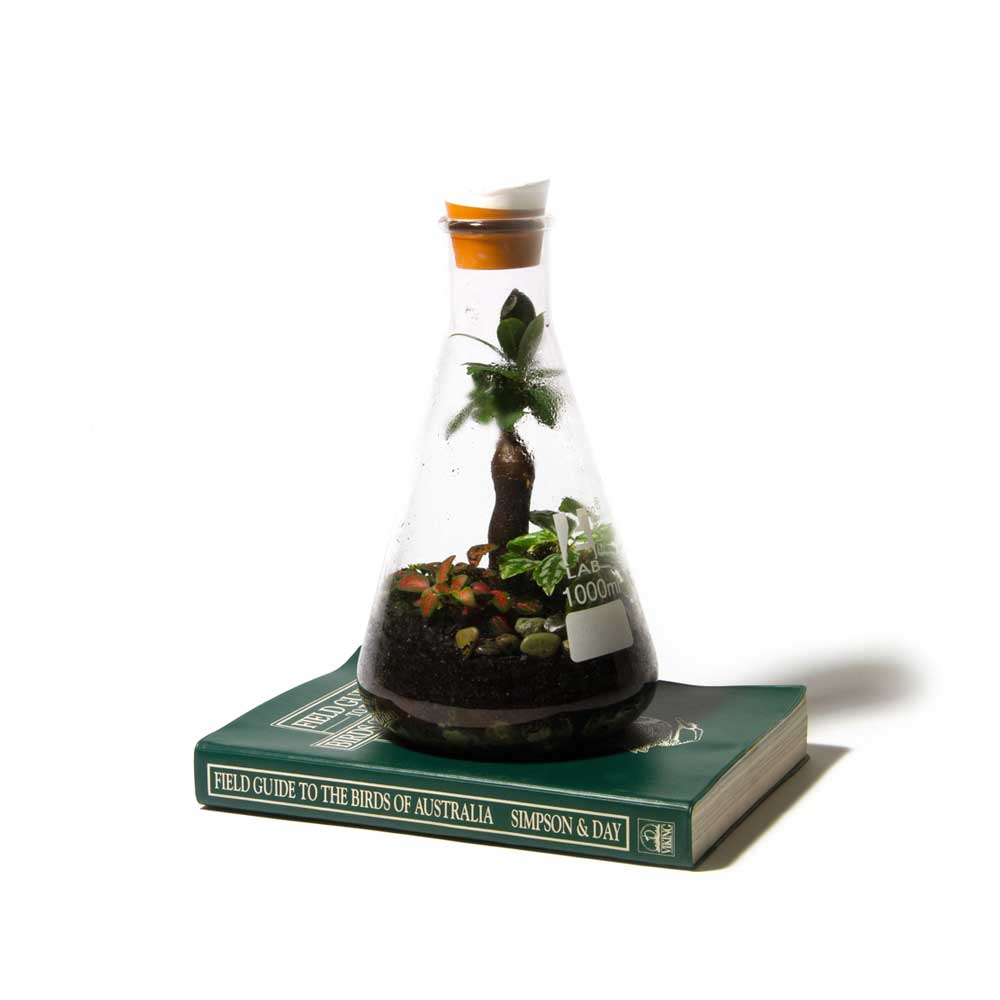 Terrarium-Low-Res-2.jpg