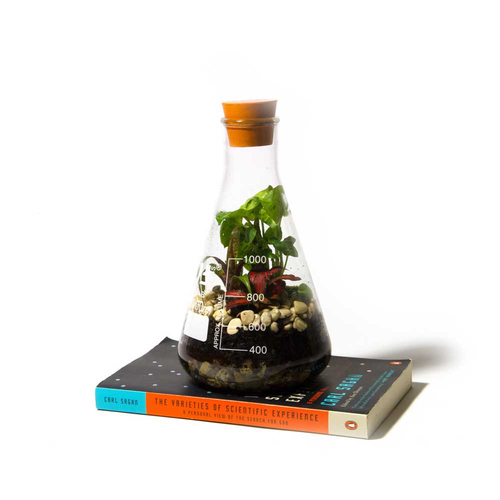 Terrarium-Low-Res-4.jpg