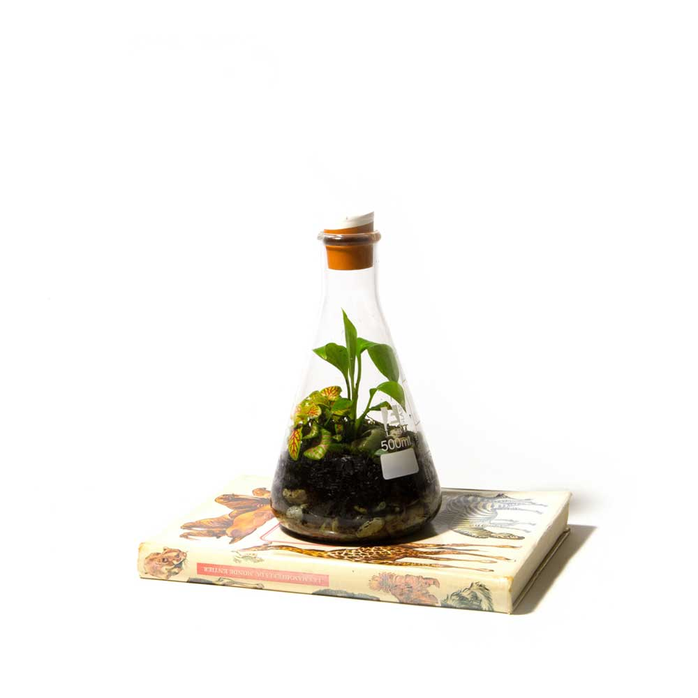 Terrarium-Low-Res-5.jpg