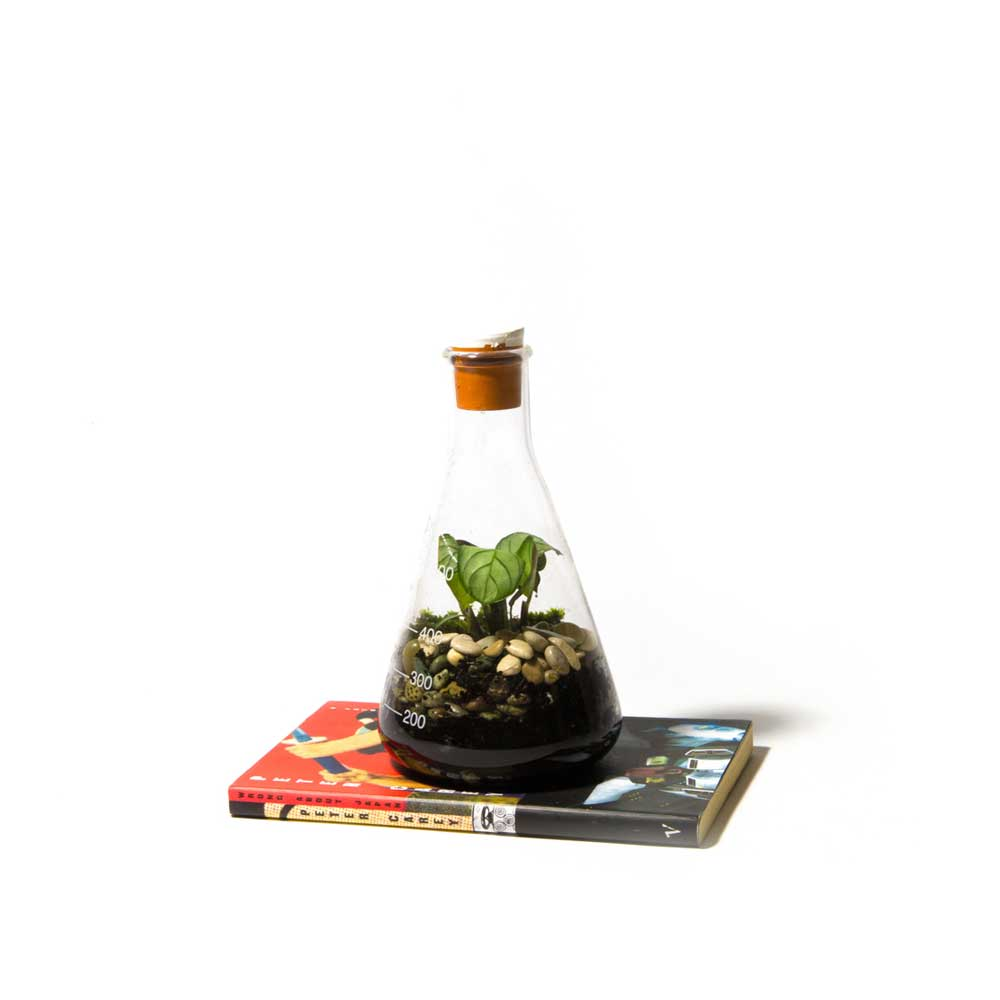 Terrarium-Low-Res-6.jpg