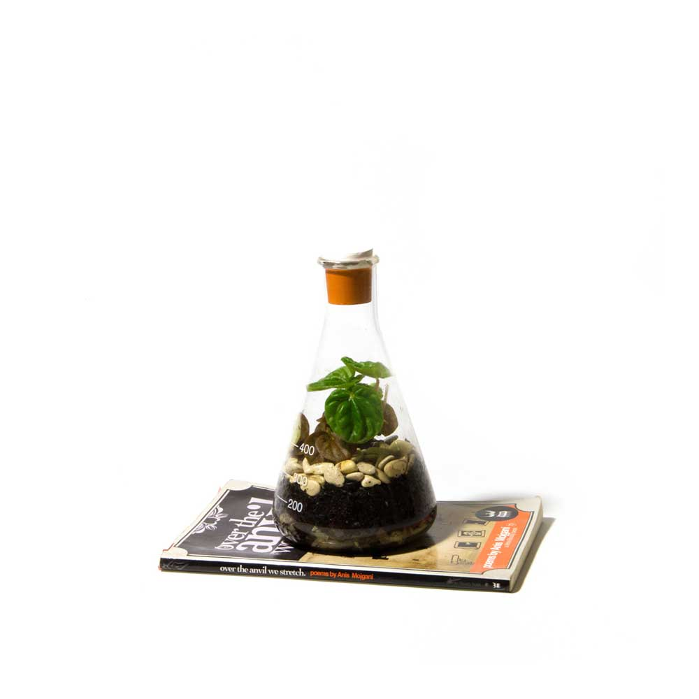 Terrarium-Low-Res-8.jpg