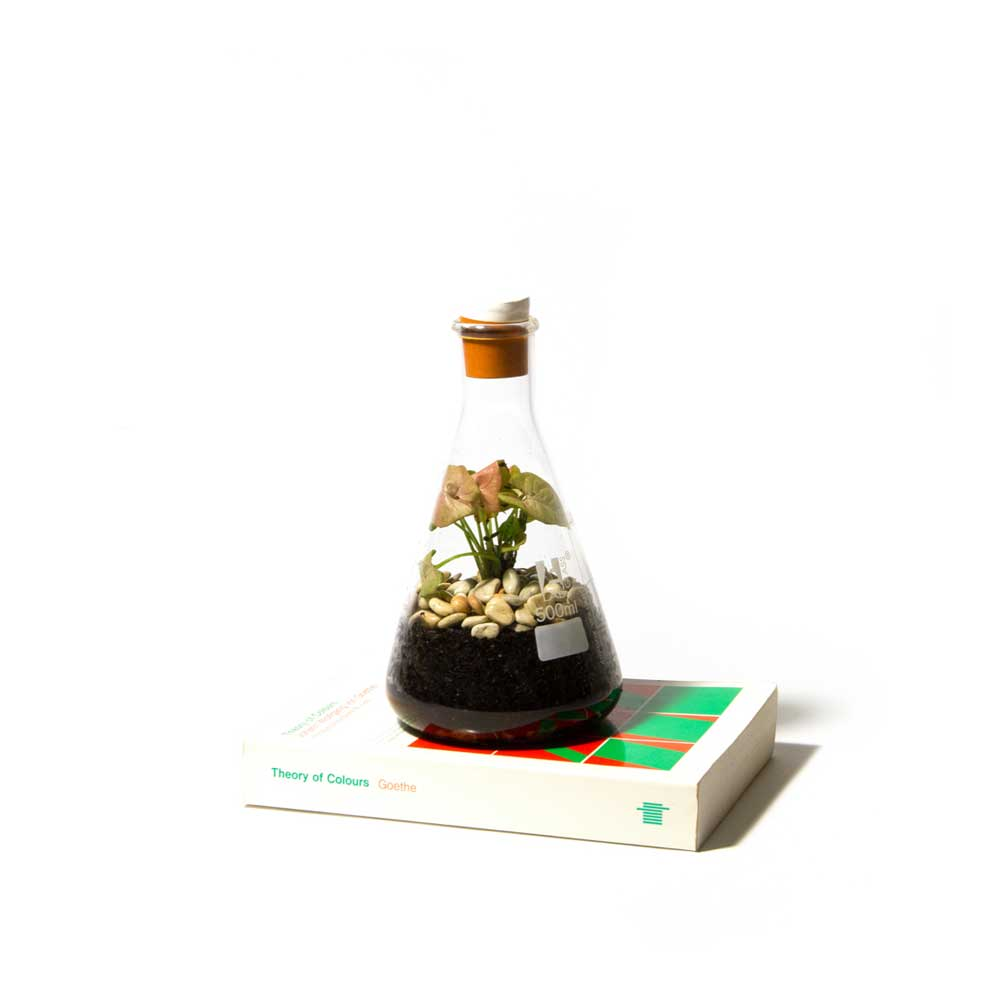 Terrarium-Low-Res-9.jpg