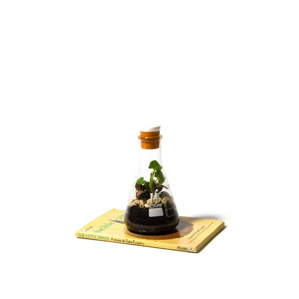 Terrarium-Low-Res-12.jpg