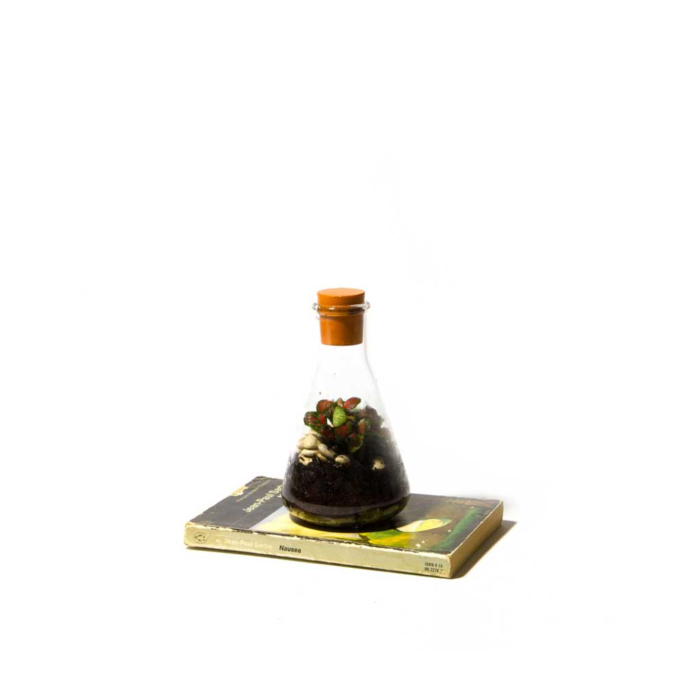 Terrarium-Low-Res-13.jpg