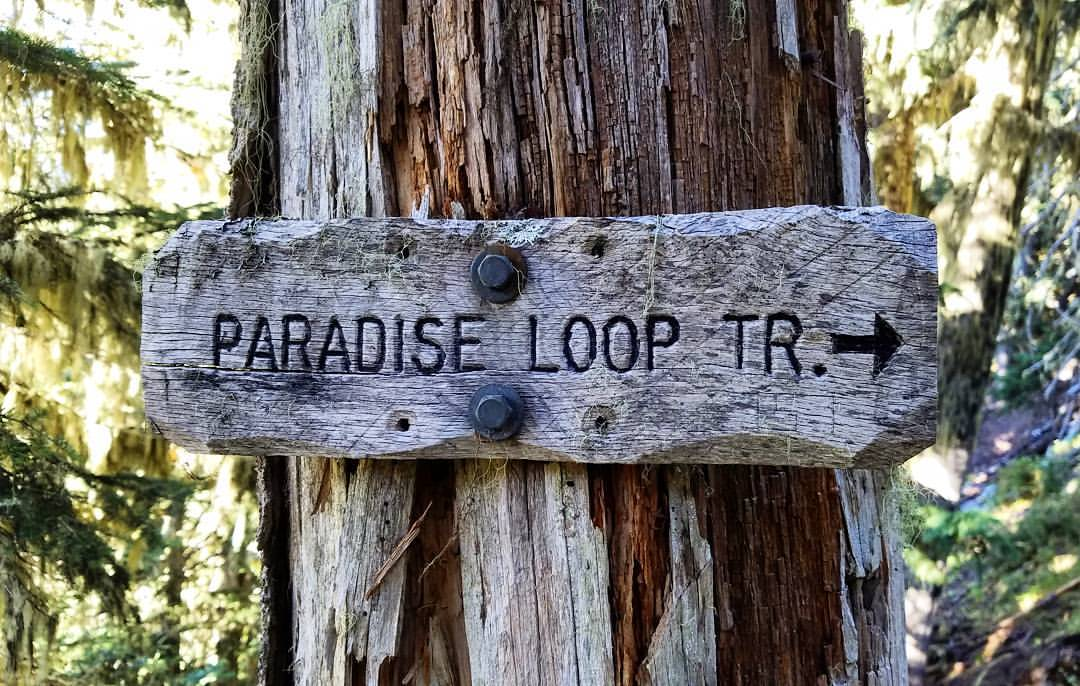Paradise Loop, a worthy side trip which only added a mile