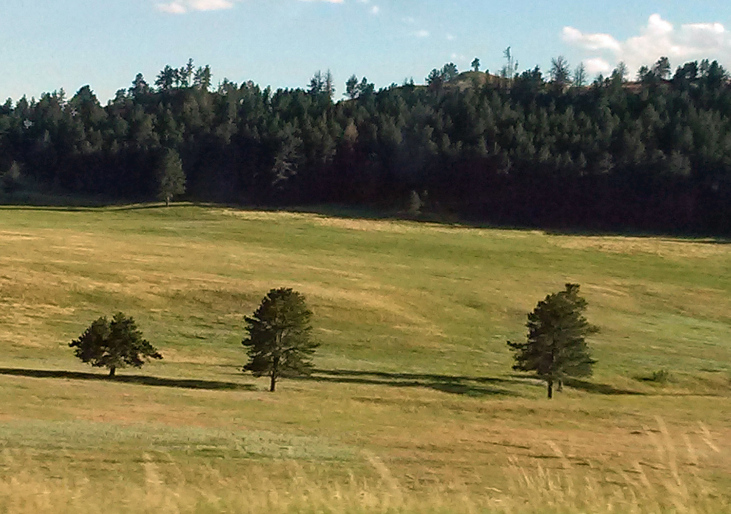 Threee - NR--Day11 - Custer State Park, SD.jpg