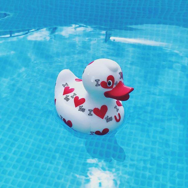 Love is love! 😍❤️☀️ Original photo: @makabibe . . . . . #bud #iloveyou #duck #loveislove #pooltime #itsalllove #lovemore