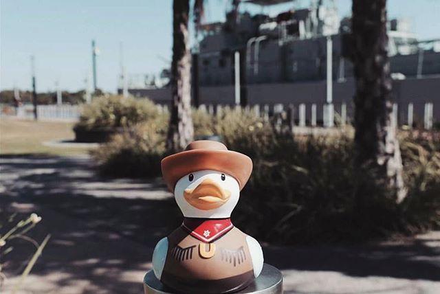 A cowboy's life is outdoors! 😎☀️😍 #budduck Original photo: @bud_the_duck . . . . . #bud #cowboy #duck #thegreatoutdoors #yeehaw #cowboyhat #duckadventures