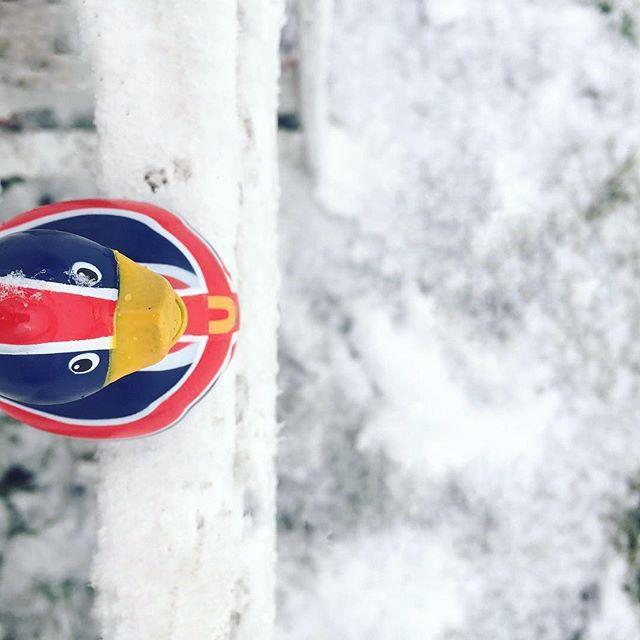 Ducks on ice is very nice! 😍❄️😅 #budduck Original photo: @monalisasmile_in_uk . . . . . #bud #brit #duck #ducksonice #snowday #unionjack